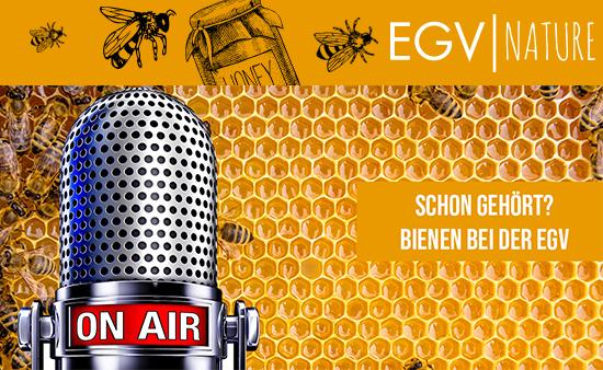 100.000 Bienen bei der EGV|AG